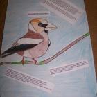 Europejskie Dni Ptaków